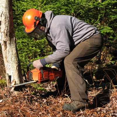 Cutting Down Dead Tree